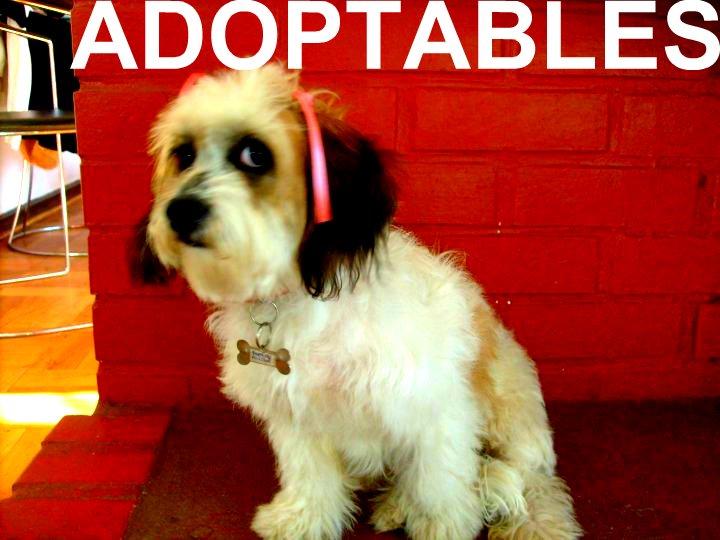 perros en adopción - galería